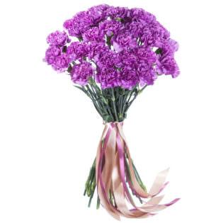 Гвоздика фиолетовая